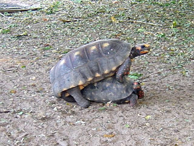 Tortuga Tierra Pictures